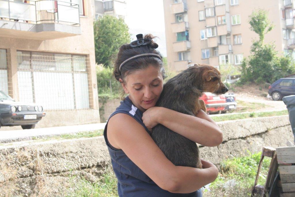 Der Hund aus der Tierrettung Verständnis und Geduld ist der Schlüssel.