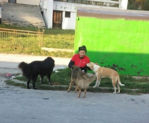 Die Straßenhunde in Travnik sind versorgt
