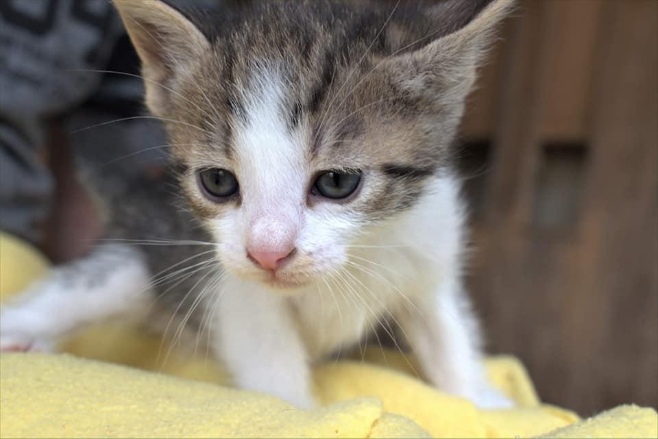 Wir suchen Pflegestellen für Mutterkatzen mit Babys