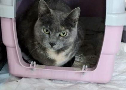 Lucy 3-4 Jahre sucht ein Zuhause