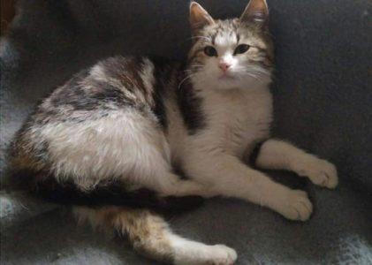 °°°Reserviert °°°Sweety ,die süße Katze sucht ein Zuhause 6 Monate