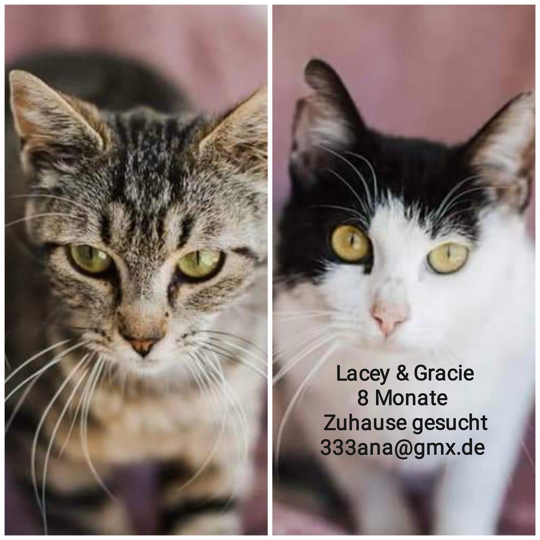 Lacey & Gracie  8 Monate suchen ein Zuhause