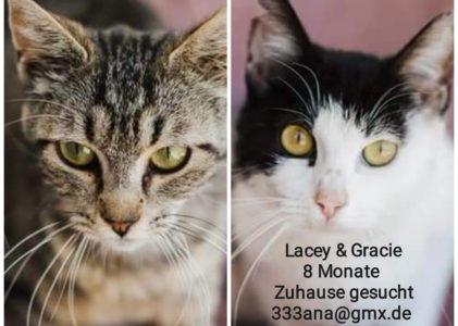 Lacey und Gracie,8 Monate