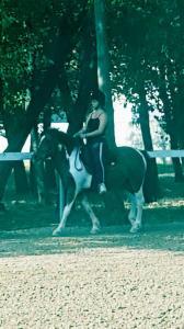 Die Pferde Flüsterin